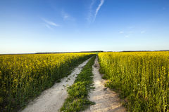 The Road To A Field Stock Image