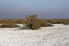 Free The Salt Desert And Salsola Plants , Iran Royalty Free Stock Photo - 159735285