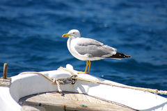 Free The Seagull Sitting On A Nose Of A Fishing Boat Royalty Free Stock Image - 6311656