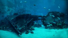 Free The Shipwreck On The Ocean Floor Royalty Free Stock Photography - 100244187