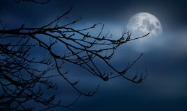 Free The Silhouette Of A Spooky Bare Branch Halloween Tree Against A Winter Blue Night Sky Royalty Free Stock Images - 196394959