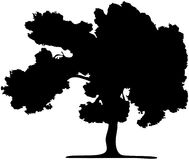 The Silhouette Of A Tree Isolated On A White Royalty Free Stock Image