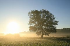 Free The Silhouette Of A Tree On Field Against Blue Sky In Misty Autumn Weather During Sunrise Single Sunny Foggy Morning Royalty Free Stock Photo - 139203015