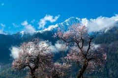 Free The Snow Mountain In Tibetan Plateau. Stock Photography - 69548122