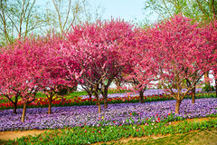 Free The Spring Scenery Royalty Free Stock Image - 95488596