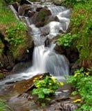 The Stream Flows On Stones Stock Photos