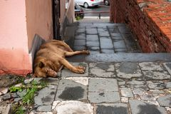 Free The Street Dog Is Sleeping. Next To Concept Of Stray Animals Trash, Environmental Pollution Concept Stock Image - 157588631