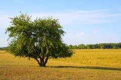 The Summer Landscape Stock Photos