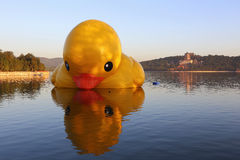 Free The Summer Palace Rhubarb Duck Royalty Free Stock Photos - 34841378