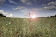 Free The Sun Sets Over A Field Full Of Summer Flowers Stock Image - 191075381