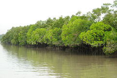 Free The Sundarbans Royalty Free Stock Image - 18069176