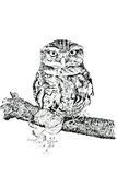 The Tawny Owl Stock Image