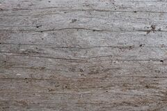Free The Texture Of Dry Pine Gray. The Trunk Of An Old Tree Without Bark. Wood Background Royalty Free Stock Image - 177580846