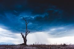 Free The Tree Without Leaf Standing Dead On Dry Ground With Stormy Cloud Background. Global Warming Crisis, Royalty Free Stock Photo - 155418575