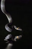 The Water Snake Stock Photos