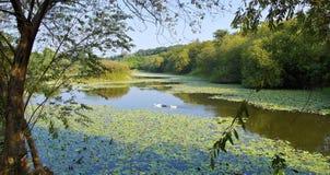 The Wetland Swamp Near City I Royalty Free Stock Photo