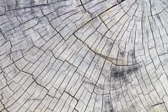 Free The Wood Background, Wood Surface, Wood Texture Stock Images - 112402034