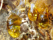 Free The Yellow Drop Of Resin Stock Photos - 72304193