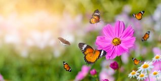 Free The Yellow Orange Butterfly Is On The White Pink Flowers In The Green Grass Fields Royalty Free Stock Photos - 162336948