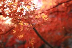 Autumn in november Royalty Free Stock Photo