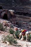Theatre of petra Jordan. Horse in front of theatre of petra Jordan Stock Photo