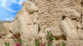 thebes för tempel för egypt karnakserie stock video