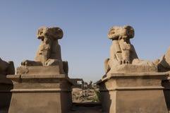 thebes för tempel för egypt karnakserie egypt luxor Arkivbilder