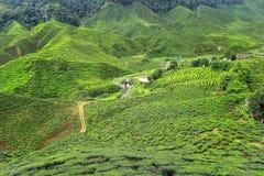 Het hoogland Maleisië van Cameron. Royalty-vrije Stock Afbeelding