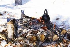 Thee in groot in openlucht tijdens een de winterstijging in het bos Stock Afbeelding