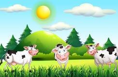 Thee krowy stoi w farmyard Zdjęcie Stock