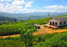 Theeaanplanting, bergen en school Nanuoya Stock Afbeeldingen
