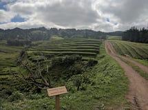 Theeaanplanting de Azoren Royalty-vrije Stock Foto's