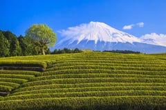 Theeaanplanting en MT fuji Stock Foto