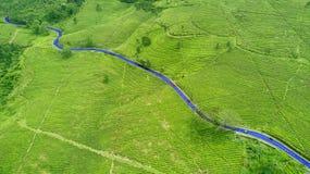 Theeaanplanting en weg Stock Afbeelding