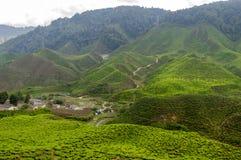 Theeaanplanting op terrasvormige heuvels in Maleisië 01 stock afbeelding