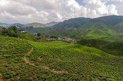 Theeaanplanting op terrasvormige heuvels in Maleisië 02 royalty-vrije stock afbeeldingen