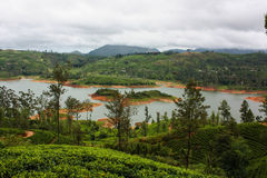 Theeaanplanting in Sri Lanka, Nowember 2011 royalty-vrije stock afbeelding