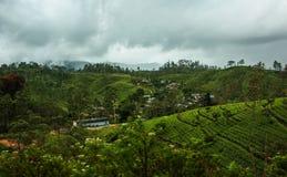 Theeaanplanting in Sri Lanka, Nowember 2011 stock foto's