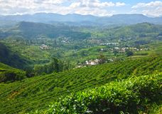 Theeaanplantingen, bergen, bomen en dorp Nanuoya Royalty-vrije Stock Afbeelding