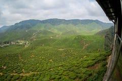 Theeaanplantingen Cameron Highlands Stock Foto