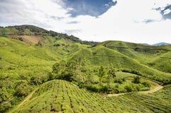 Theeaanplantingen in de hooglanden van Cameron, Pahang-Staat, Maleisië De Kayan-mensen zijn een subgroep van de Rode mensen van K Stock Afbeelding