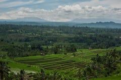 Theeaanplantingen in Indonesië Royalty-vrije Stock Afbeelding
