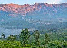Theeaanplantingen in Munnar, Kerala, Zuid-India royalty-vrije stock foto's