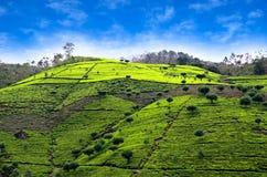 Theeaanplantingen in Sri Lanka royalty-vrije stock afbeelding