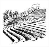 Theeaanplantingen - vectorillustratie Royalty-vrije Stock Fotografie