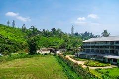 Theefabriek en theeaanplanting Sri Lanka stock foto's