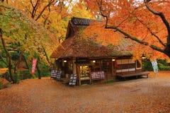 Theehuis bij dalingsseizoen Nana, Japan stock fotografie