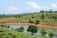 Theelandbouwbedrijf bij Bao Loc-hoogland stock afbeeldingen