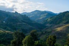 Theelandbouwbedrijf op de heuvels Royalty-vrije Stock Fotografie