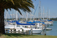 At their moorings. Sail boats rest at their moorings at the Motueka Yacht club in New Zealand Royalty Free Stock Photos